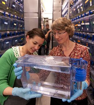 Solnica-Krezel in zebrafish facility